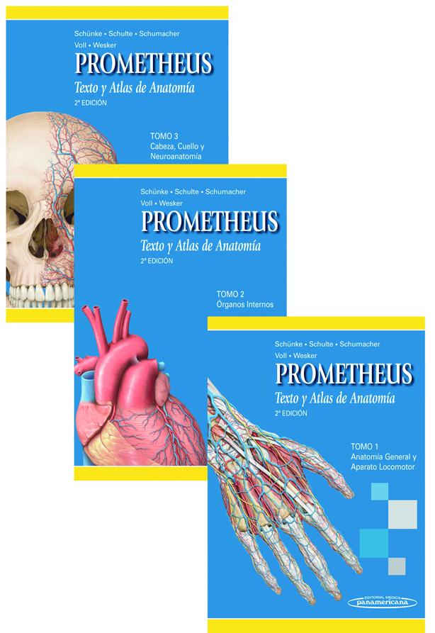 El arte de enseñar anatomía humana - Diariomedico.com - Diariomedico.com